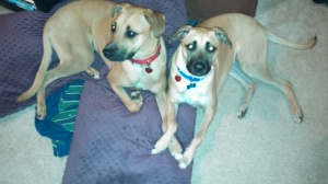 Dallas and Casey...look at those faces!